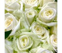 Роза «Аваланч»