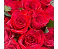 Роза «Red Eagle»