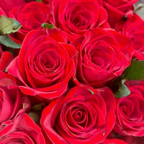 Роза «Red Eagle» (1 шт), высота цветка в ассортименте
